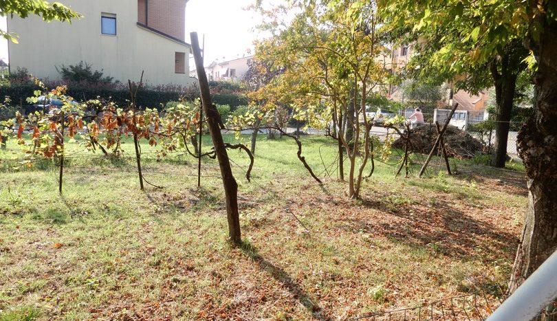 Giardino/Terreno eidficabile